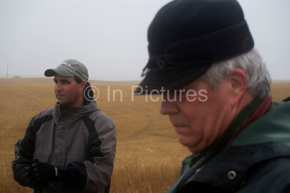 Experienced hunter Byron Grubb with his son Eric out on the North Dakota prarie grasslands west of Minot, shooting upland game birds such as grouse (also known in this area as 'chickens'). Byron and Eric have been shooting for most of their lives and put considerable efforts into his hunting, efforts which reward them with wild game meats, none of which is wasted. This cold wet morning is not ideal for this type of shooting as the birds tend to sit tight in the undergrowth. The hunters on occasion nearly tread on the birds before they will take flight.