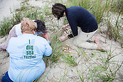 Volunteers taking inventory of Loggerhead Sea turtle nest