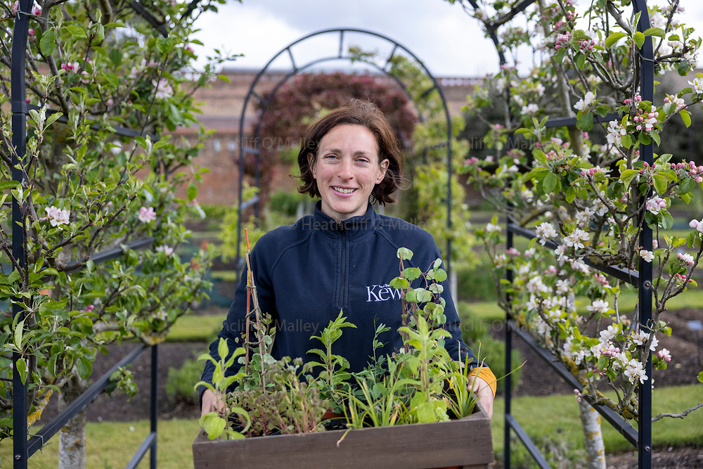Mcc0100051 . Sunday Telegraph<br /> <br /> Create<br /> <br /> Helena Dove the head of the kitchen garden at Kew with a tray filled with  ….<br /> Oca: Oxalis tuberosa<br /> Mashua: Tropaeoleum tuberosum<br /> Chinese crones: Stachys affinis<br /> Earthnut: Lathyrus tuberosus<br /> Tigernut: Cyperus esculentus<br /> <br /> London 6 May 2021