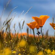 antelope valley, california