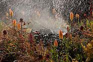 RHS Hampton Court Palace Flower Show 2014/15