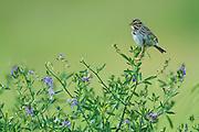 Sparrow, Montana.