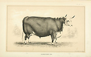 from Cattle and dairy farming. Published 1887 by Govt. Print. Off. in Washington. United States. Bureau of Foreign Commerce (1854-1903)