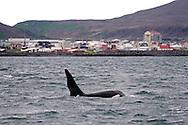 Taken off the coast of Grindavik, SW Iceland