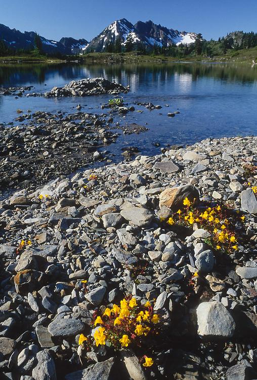 Mount Duckabush, Lake LaCrosse, yellow monkeyflowers, summer, Olympic Natinal Park, Washington, USA