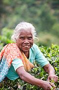A tea plucker near Ella village, Southern Highlands, Sri Lanka