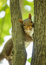 Peekaboo - Gettin Squirrely with It