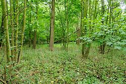 Staelduinse Bos, 's-Gravezande, Westland, Zuid Holland, Netherlands