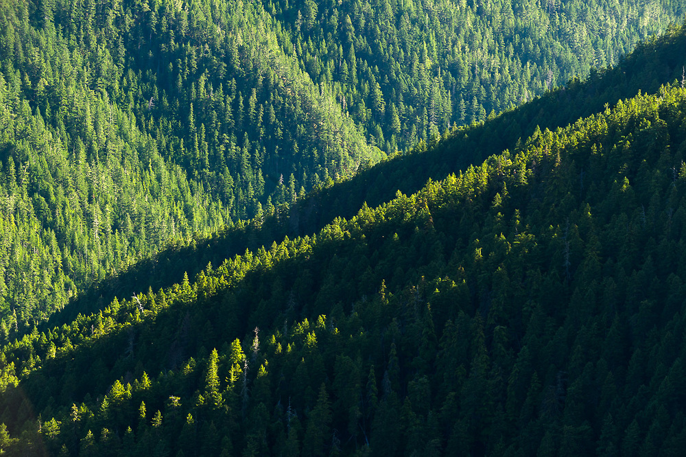 The Bailey Range and Elwha River watershed, evening light, August, Olympic Mountains view from Hurricane Ridge, Olympic National Park, Clallam County, Washington, USA