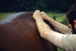Using Acupuncture On Horse
