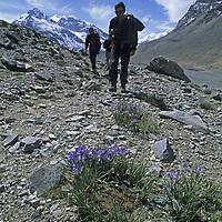 Trekkers walk past alpine wildflowers in the Pamir Mountains near Lake Karakull, Xinjiang, China.