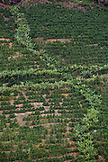 Conceicao do Castelo_ES, Brasil...Plantacao de bananas e cafe ao lado de trecho da rota Imperial...Agriculture of bananas and coffee next to the Imperial route...Foto: LEO DRUMOND / NITRO