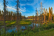 Wetland at sunset. Boreal forest.<br />Duck Mountain Provincial Park<br />Manitoba<br />Canada