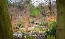 The Winter Garden at Dunham Massey. Planting includes Iris 'Katharine Hodgkin' (Reticulata), Cornus sanguinea 'Midwinter Fire' and Prunus serrula var. tibetica