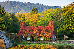 © Licensed to London News Pictures. 21/09/2020. Llanrwst UK. The Virginia Creeper that covers the Tu Hwnt I'r Bont tea room in Llanrwst in Wales has turned bright red the day before Autumn in the UK. Photo credit: Andrew McCaren/LNP