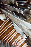 bahamas lionfish spines
