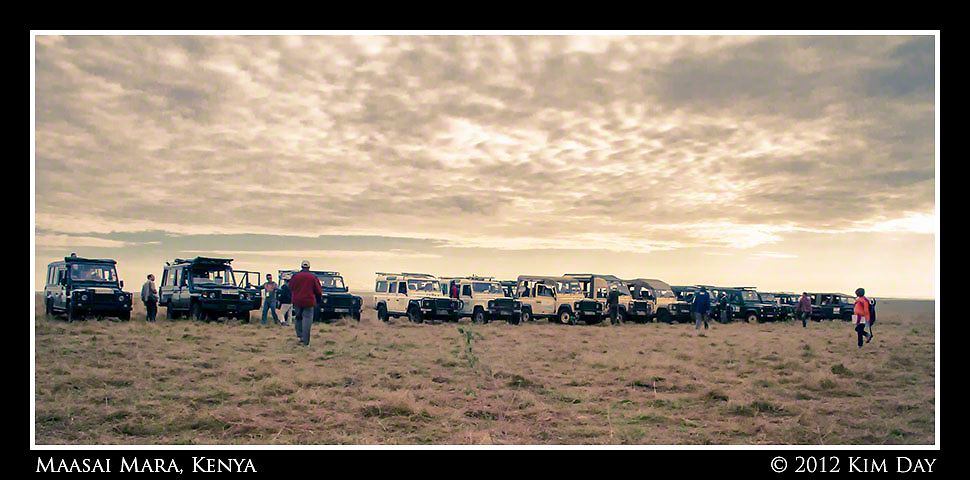 Line of Land Rovers Waiting for Mass Of Chinese Tourists.Maasai Mara, Kenya.September 2012