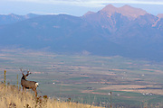 A buck in the National Bison Range Wildlife Refuge looks out over Mission Valley in northwest Montana Missoula Photographer, Missoula Photographers, Montana Pictures, Montana Photos, Photos of Montana