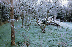 The orchard meadow at Ketley's in winter