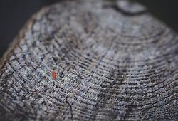THEMENBILD - eine verwitterte Holzstruktur, aufgenommen am 05. August 2018, Kaprun, Österreich // a weathered wood texture on 2018/08/05, Kaprun, Austria. EXPA Pictures © 2018, PhotoCredit: EXPA/ Stefanie Oberhauser