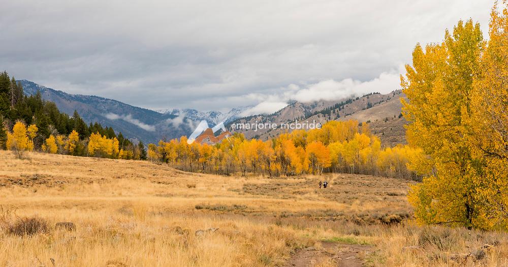Scenic view of women mountain biking during autumn, Ketchum, Idaho.