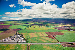 The Valley of Sugar - Maui's controversial 37,000 acre sugar cane fields - set to burn when harvesting, creating enormous smoke, ash and dust, Maui, Hawaii, USA