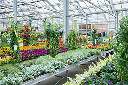 Plants for sale in garden centre, Augsburg, Bavaria, Germany