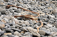 A piece of dried kelp lies across the smooth boulders of a Big Sur beach