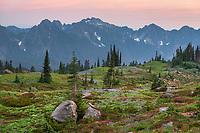 Tatoosh Range at sunset seen from paradise Meadows. Mount  Rainier National Park, Washington