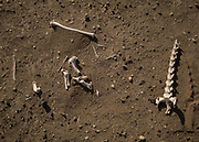 Gazelle bones. Detail of the desert ground. During this expedition, the team measured an incredible surface temperature of 78.2°C (172.7°F), the highest ever measured.