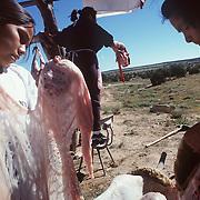 Shorty family butchering a sheep, Navajo Nation
