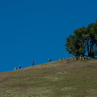Hikers stroll a trail below a wind-twisted conifer on the slopes of Mount Tamalpais, just north of San Francisco Bay in California's Bay Area.
