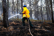 smoke smouldering ashes and a fireman at a pine tree Forest fire was put out