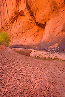 Cracking mud on floor of Choprock Canyon, Grand Staircase Escalante National Monument Utah