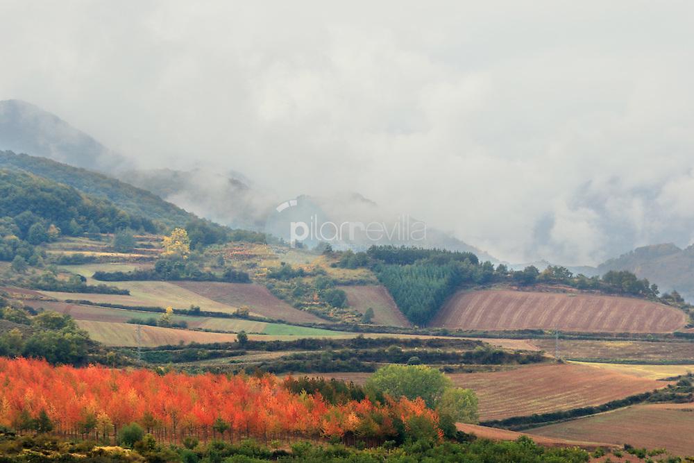 Cerezos en otoño. Valle de Cardenas. La Rioja ©Daniel Acevedo / PILAR REVILLA