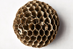 Close up of Dry Honeycomb