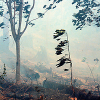 Forest fires in east Kalimantan, Indonesia   Accession #: 0.98.111.002.12