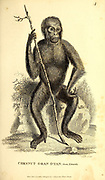 Oran Otan (Orangutan) General zoology, or, Systematic natural history Part I, by Shaw, George, 1751-1813; Stephens, James Francis, 1792-1853; Heath, Charles, 1785-1848, engraver; Griffith, Mrs., engraver; Chappelow. Copperplate Printed in London in 1800. I don't believe the artists ever saw a live specimen