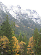 Snow capped Mountains with Trees