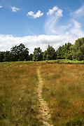Pathway on Suffolk Sandlings heathland, Sutton, Suffolk, England, UK