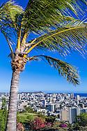 Honolulu, Oahu, Hawaii, USA --- View of Palm tree and the Honolulu skyline