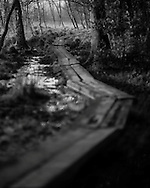 A boardwalk made of railway sleepers winds its way through wet ground at Whitmoor Common near Guildford, UK, on 9th Aptil 2015. Picture by Andrew Tobin/Tobinators Ltd