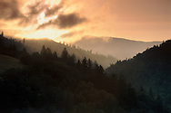 Sunrise over forest Humboldt County, California