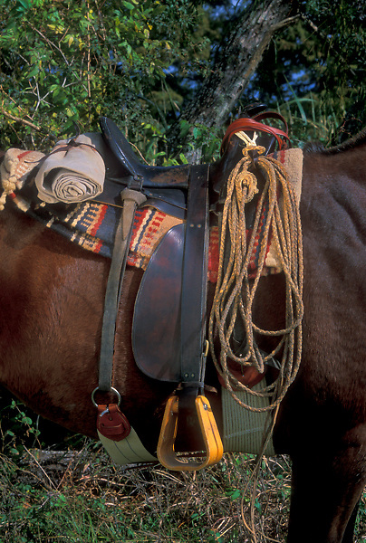 horse wearing saddle and riding gear