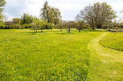 Mown grass path through wildflower meadow in large private garden, Wiltshire, England, UK