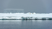 Two penguins, ice shelf and giant ice bergs in McMurdo Sound, Antarctica.