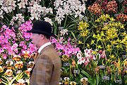 © Licensed to London News Pictures. 20/05/2013. London, UK. A man in a bowler hat walks past a display of colourful orchids.  Press day at Chelsea Flower Show 2013. The centenary edition of the show attracts large number of visitors and is already sold out before opening day. Photo credit : Stephen Simpson/LNP