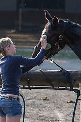 Horse care <br /> CIC3* Renswoude 2013<br /> © Dirk Caremans