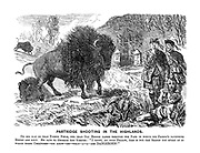 """Partridge Shooting in the Highlands. On his way to that turnip field, our dear Old Briggs passes through the park in which his friend's favourite bisons are kept. He says to Geordie the keeper: """"I trust, my good fellow, this is not the season you spoke of in these creature - you know - eh - what -a - a - are DANGEROUS!"""""""