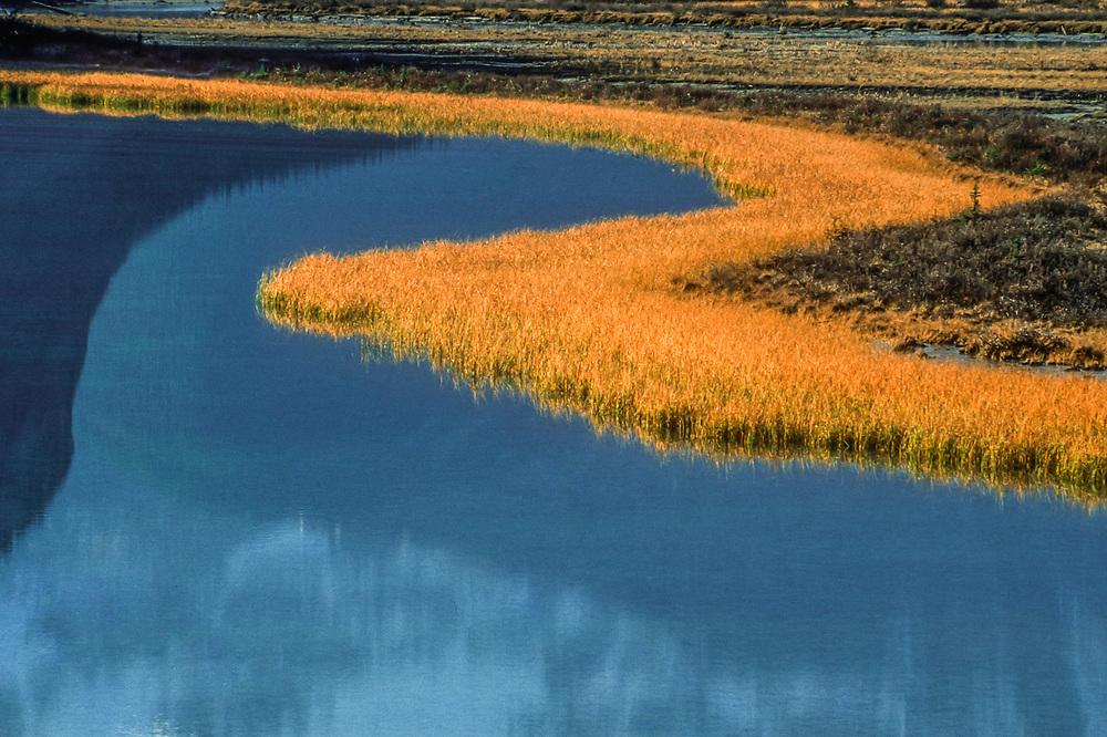Marsh grasses, side channel of the Sunwapta River, afternoon light, September, Jasper National Park, Alberta, Canada